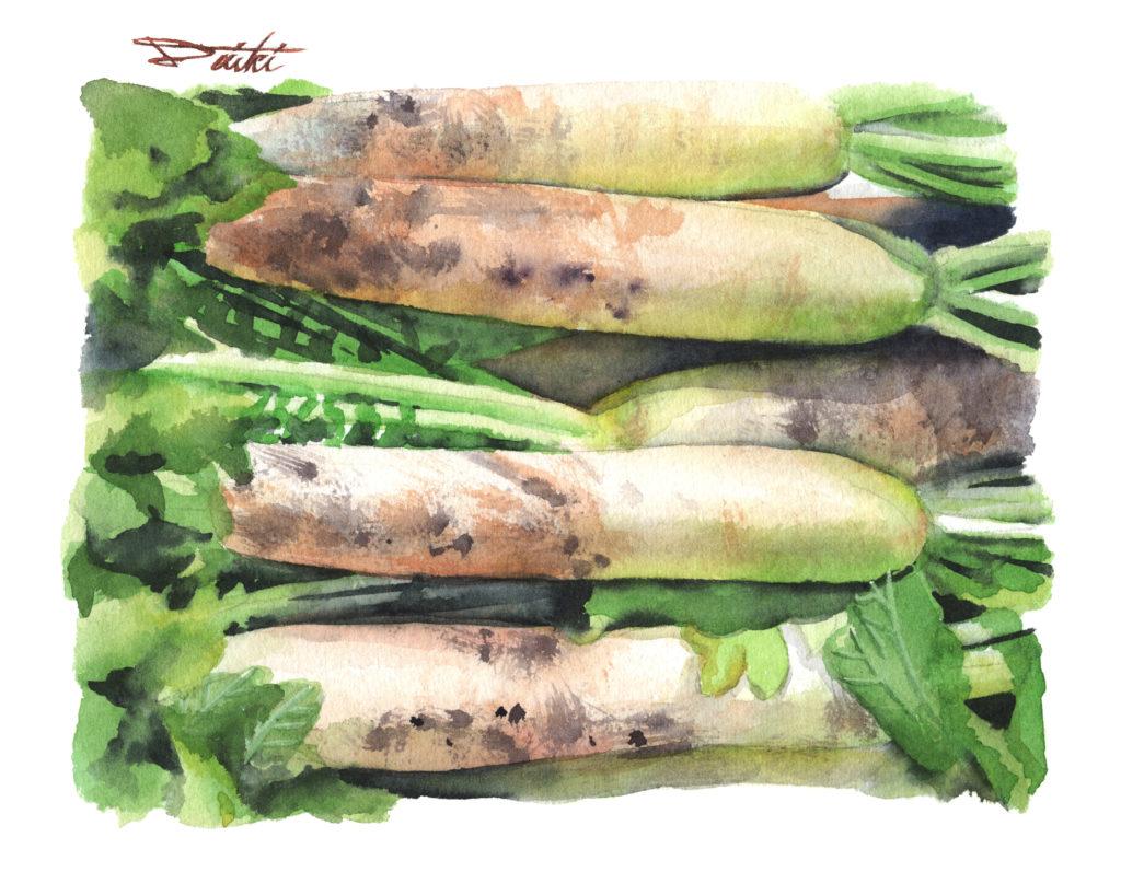 大根 水彩野菜イラスト