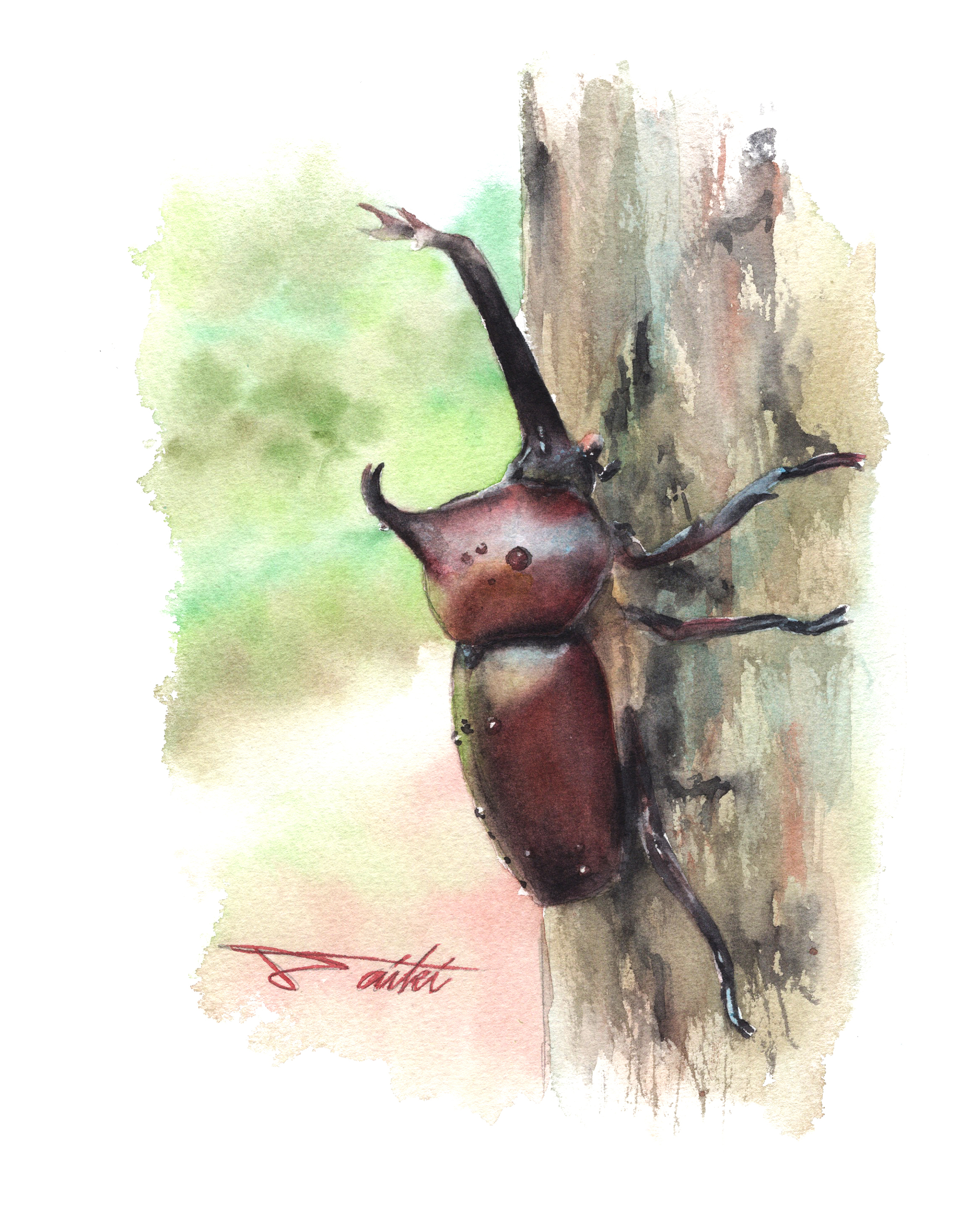 カブトムシ 水彩昆虫イラスト