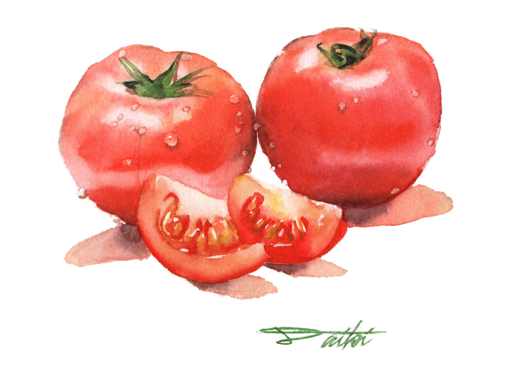 トマト 水彩野菜イラスト