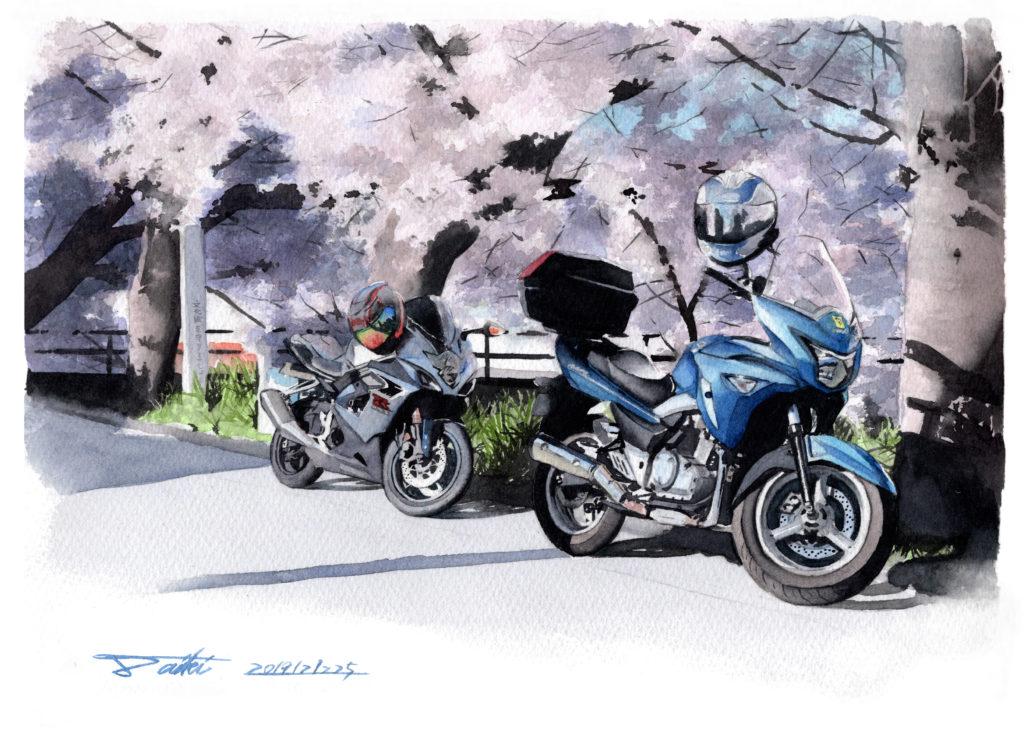 SUZUKI GSR250 GSX250R 桜 水彩バイクイラスト